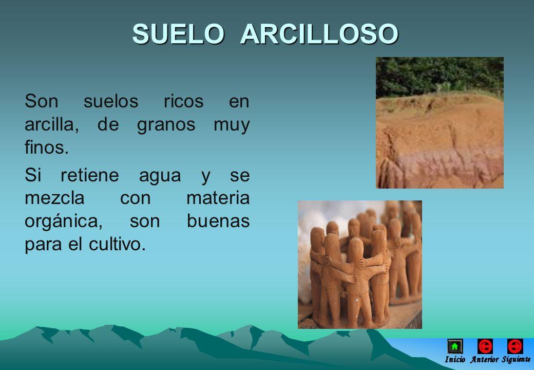 SUELO ARCILLOSO Son suelos ricos en arcilla, de granos muy finos.