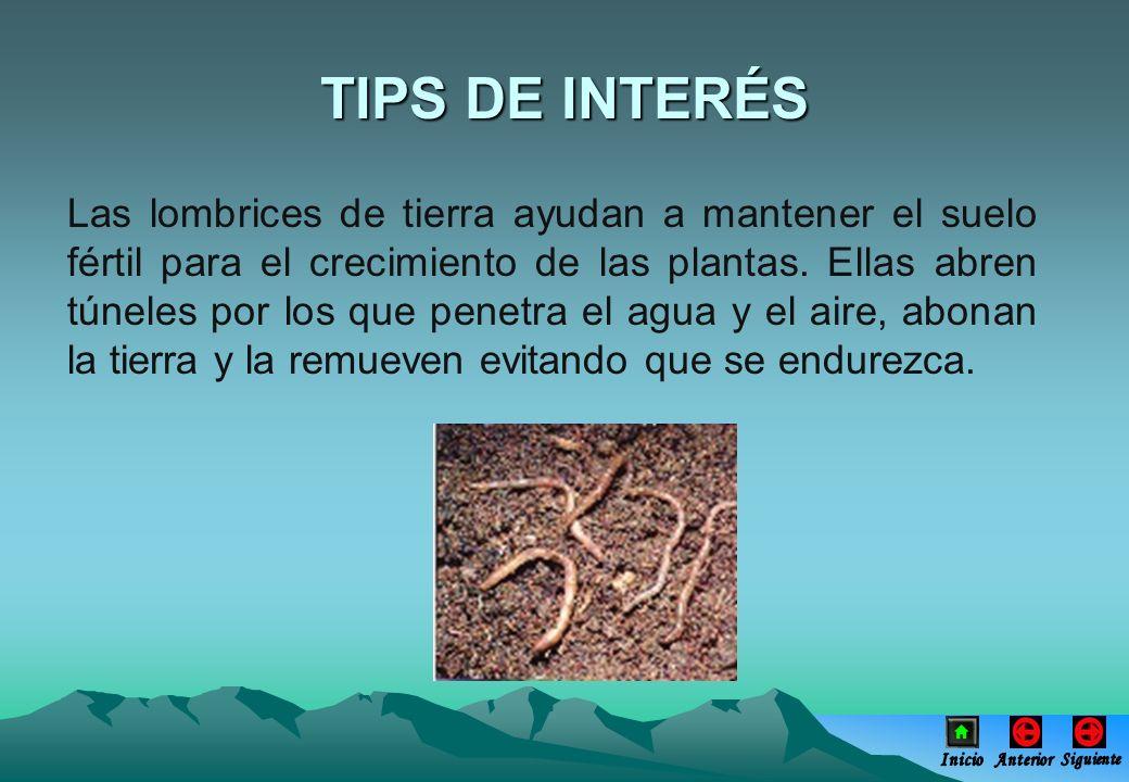 TIPS DE INTERÉS