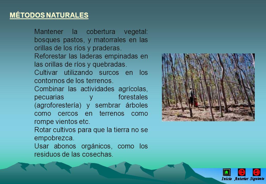Reforestar las laderas empinadas en las orillas de ríos y quebradas.