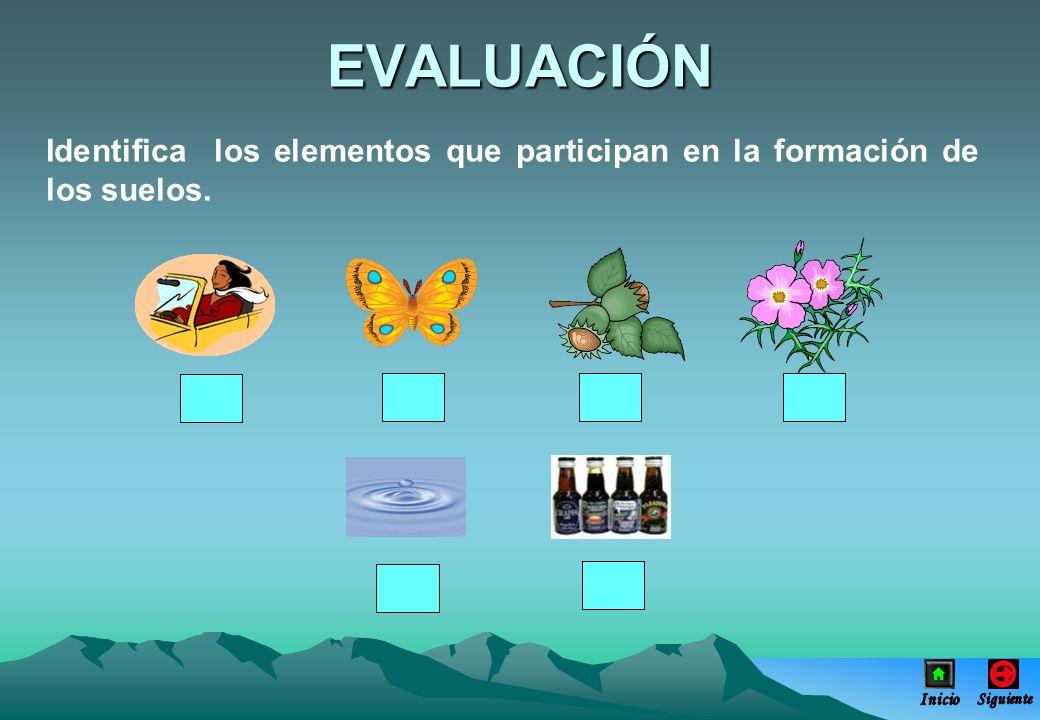 EVALUACIÓN Identifica los elementos que participan en la formación de los suelos. Inicio Siguiente