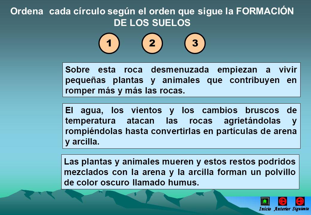 Ordena cada círculo según el orden que sigue la FORMACIÓN DE LOS SUELOS