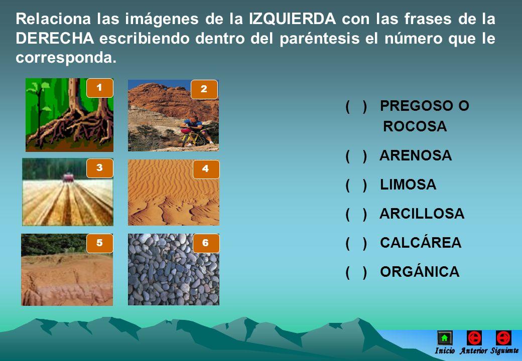 Relaciona las imágenes de la IZQUIERDA con las frases de la DERECHA escribiendo dentro del paréntesis el número que le corresponda.