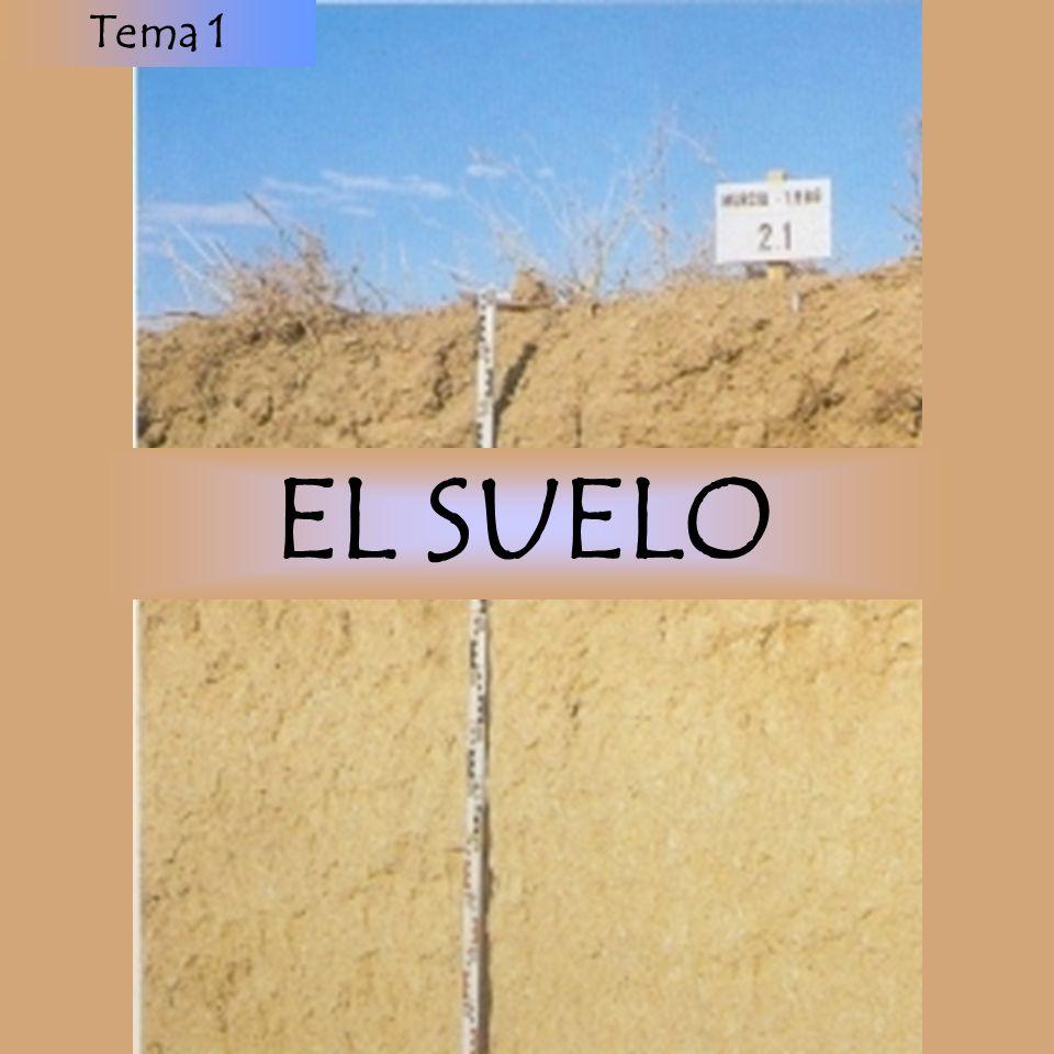 Tema 1 EL SUELO