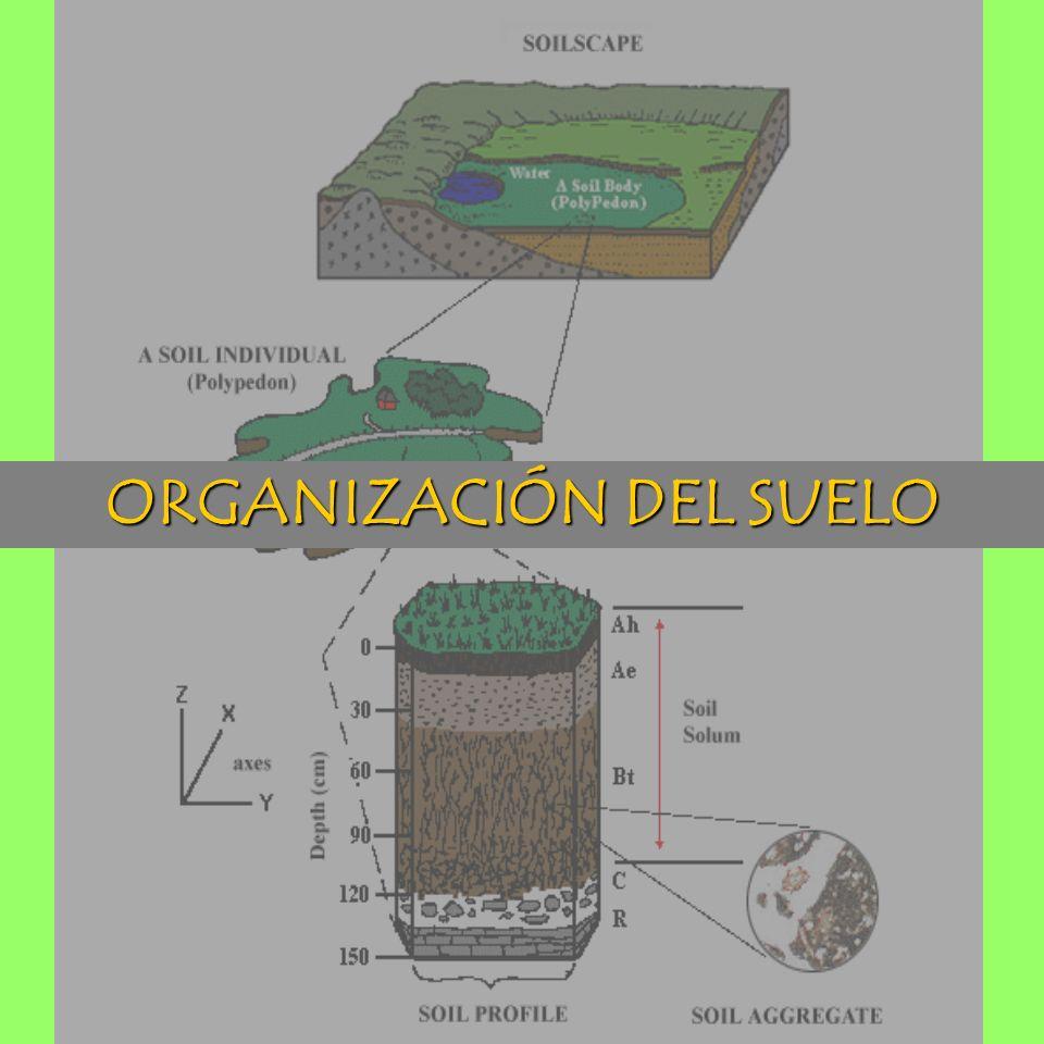 ORGANIZACIÓN DEL SUELO