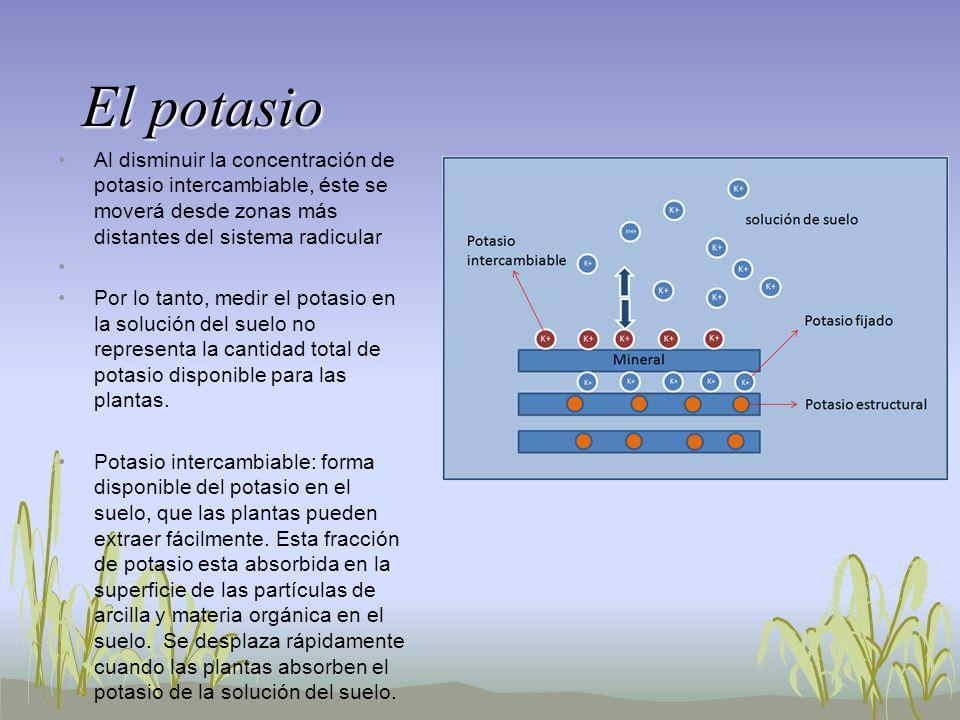 El potasio Al disminuir la concentración de potasio intercambiable, éste se moverá desde zonas más distantes del sistema radicular.