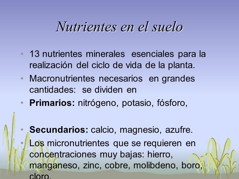 Nutrientes en el suelo 13 nutrientes minerales esenciales para la realización del ciclo de vida de la planta.