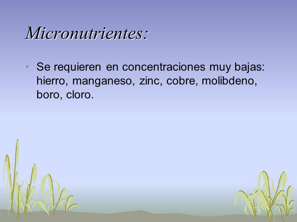 Micronutrientes: Se requieren en concentraciones muy bajas: hierro, manganeso, zinc, cobre, molibdeno, boro, cloro.