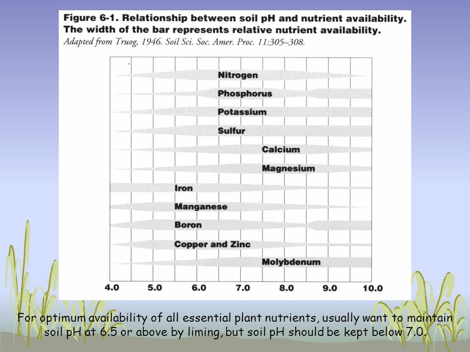 For optimum availability of all essential plant nutrients, usually want to maintain soil pH at 6.5 or above by liming, but soil pH should be kept below 7.0.