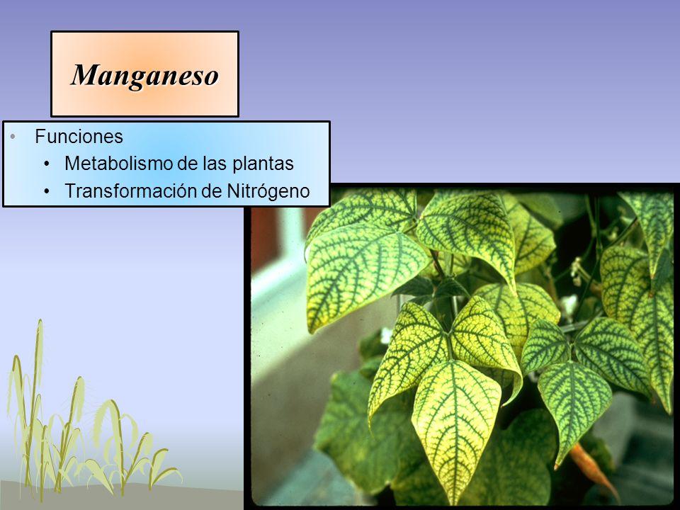 Manganeso Funciones Metabolismo de las plantas