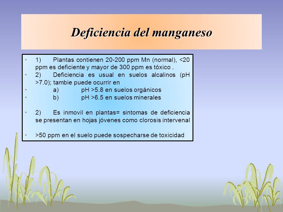 Deficiencia del manganeso