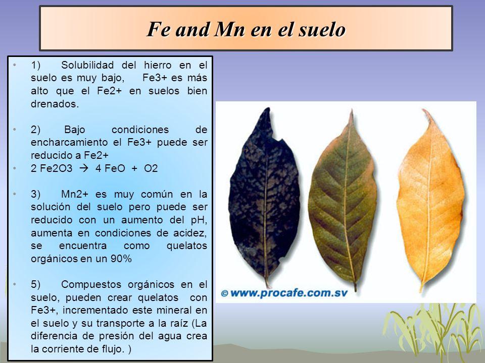 Fe and Mn en el suelo 1) Solubilidad del hierro en el suelo es muy bajo, Fe3+ es más alto que el Fe2+ en suelos bien drenados.