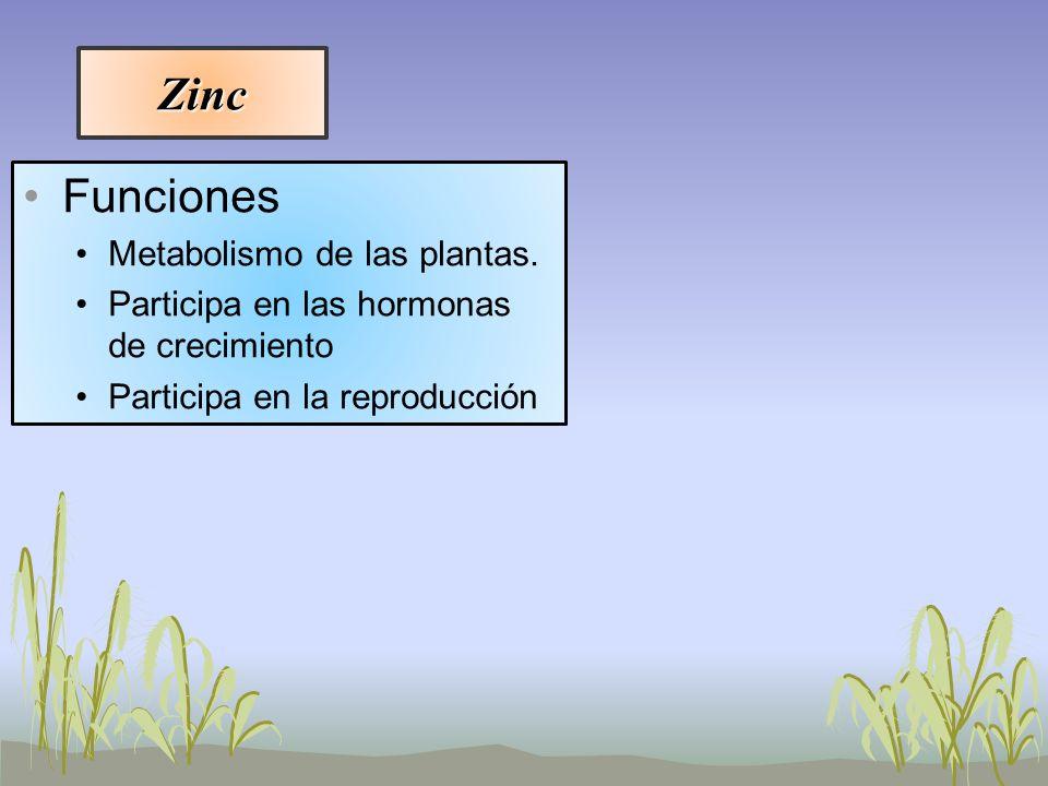 Zinc Funciones Metabolismo de las plantas.