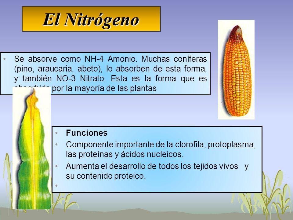 El Nitrógeno