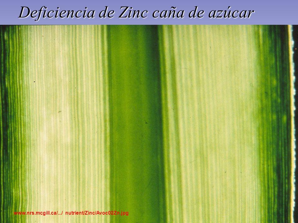 Deficiencia de Zinc caña de azúcar