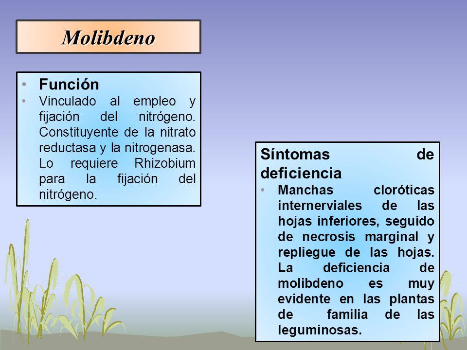 Molibdeno Función Síntomas de deficiencia