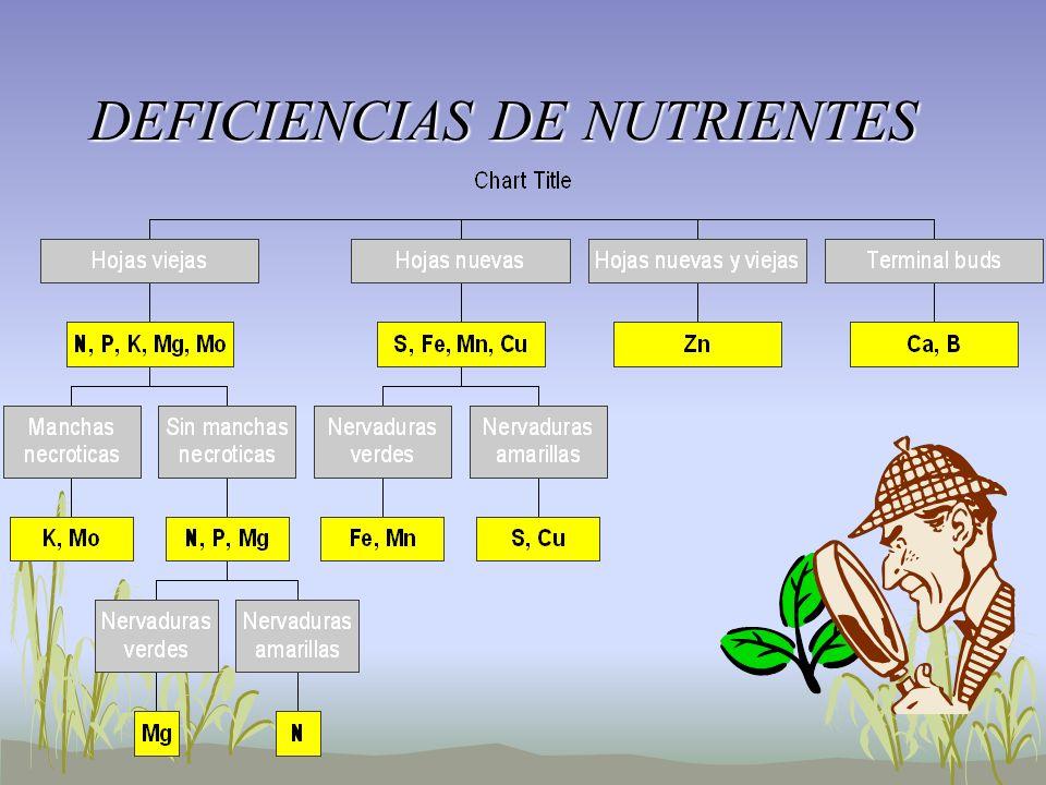 DEFICIENCIAS DE NUTRIENTES