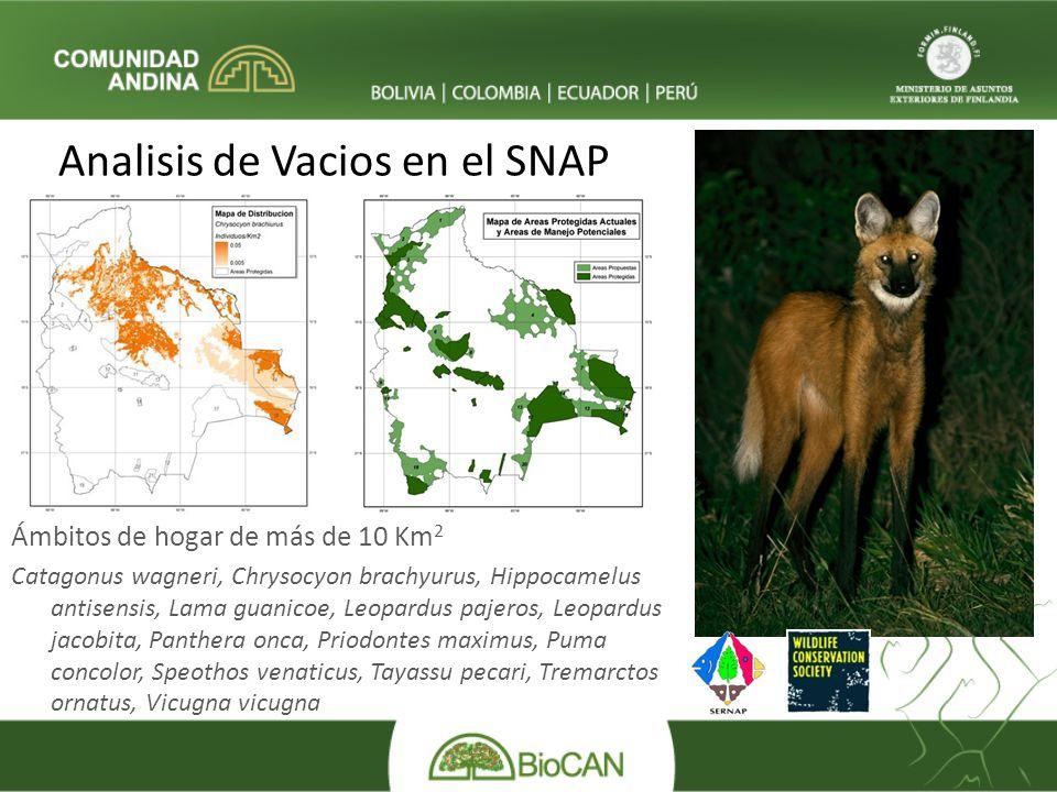 Analisis de Vacios en el SNAP