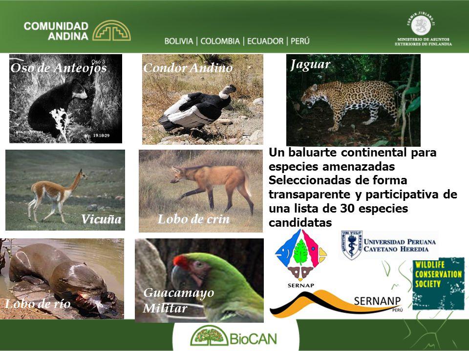 Jaguar Oso de Anteojos Condor Andino Vicuña Lobo de crin Guacamayo