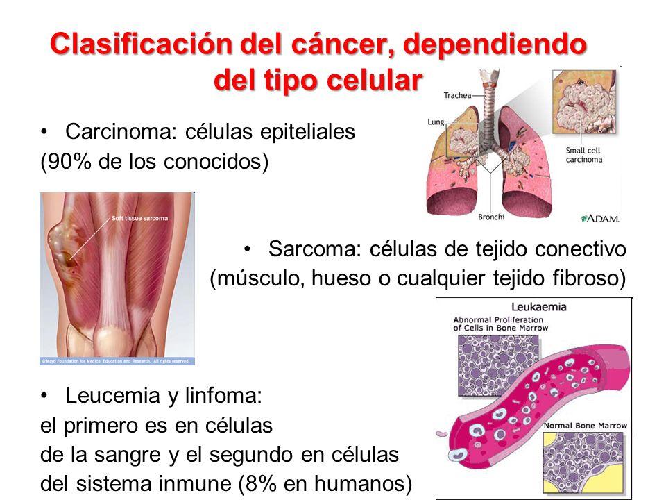 Clasificación del cáncer, dependiendo del tipo celular