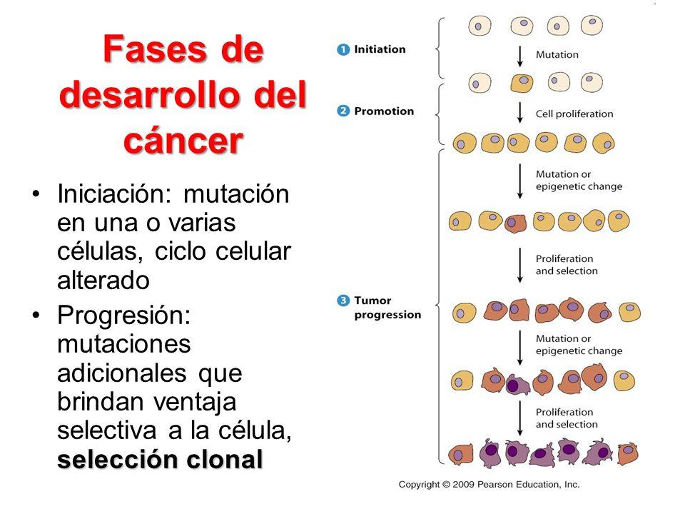 Fases de desarrollo del cáncer