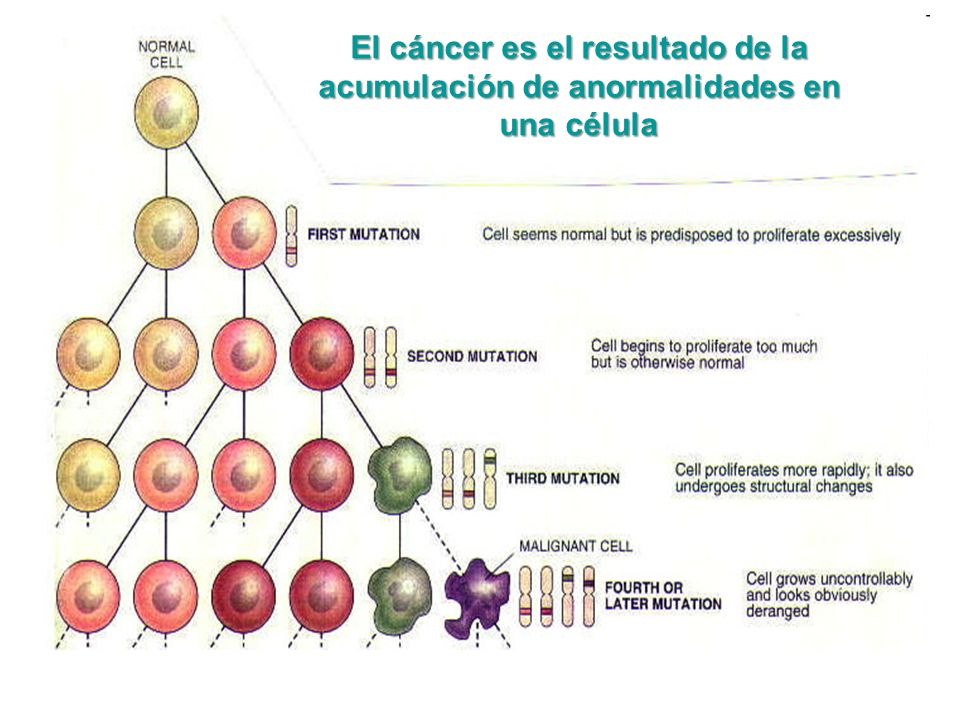 El cáncer es el resultado de la acumulación de anormalidades en una célula