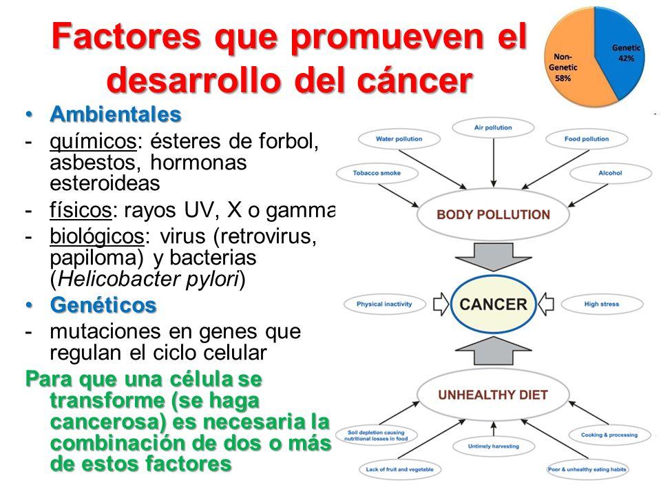 Factores que promueven el desarrollo del cáncer