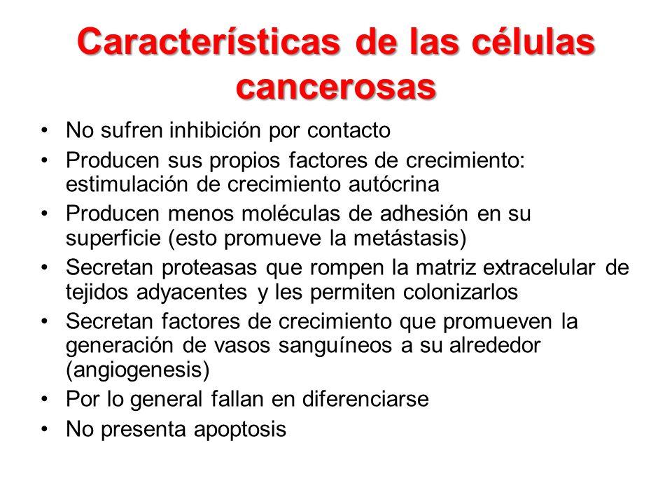 Características de las células cancerosas