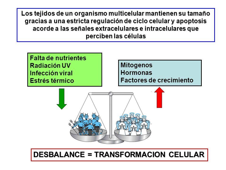 DESBALANCE = TRANSFORMACION CELULAR