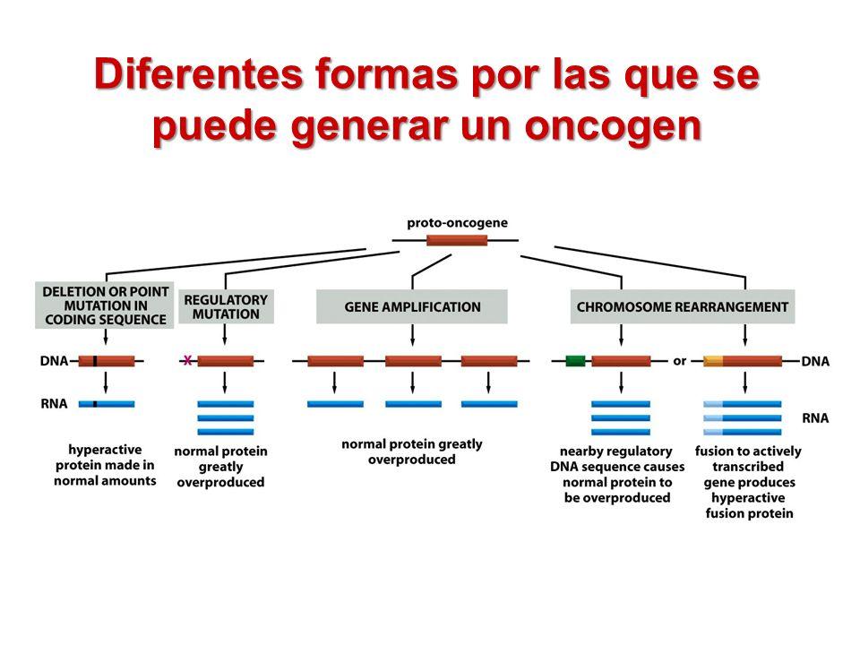 Diferentes formas por las que se puede generar un oncogen
