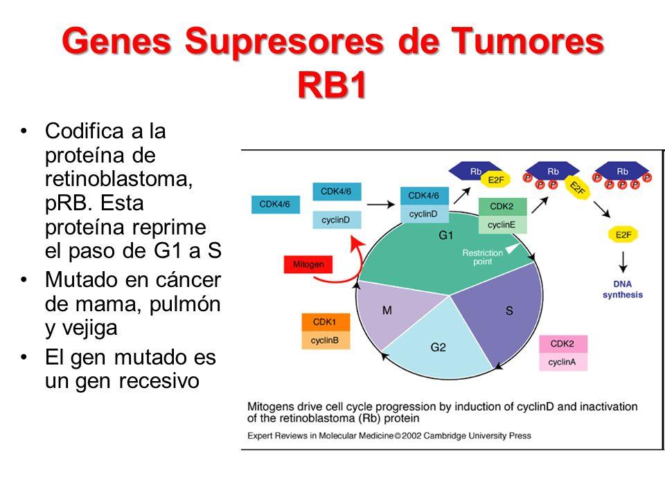 Genes Supresores de Tumores RB1