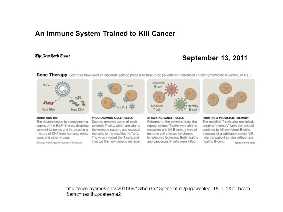 An Immune System Trained to Kill Cancer