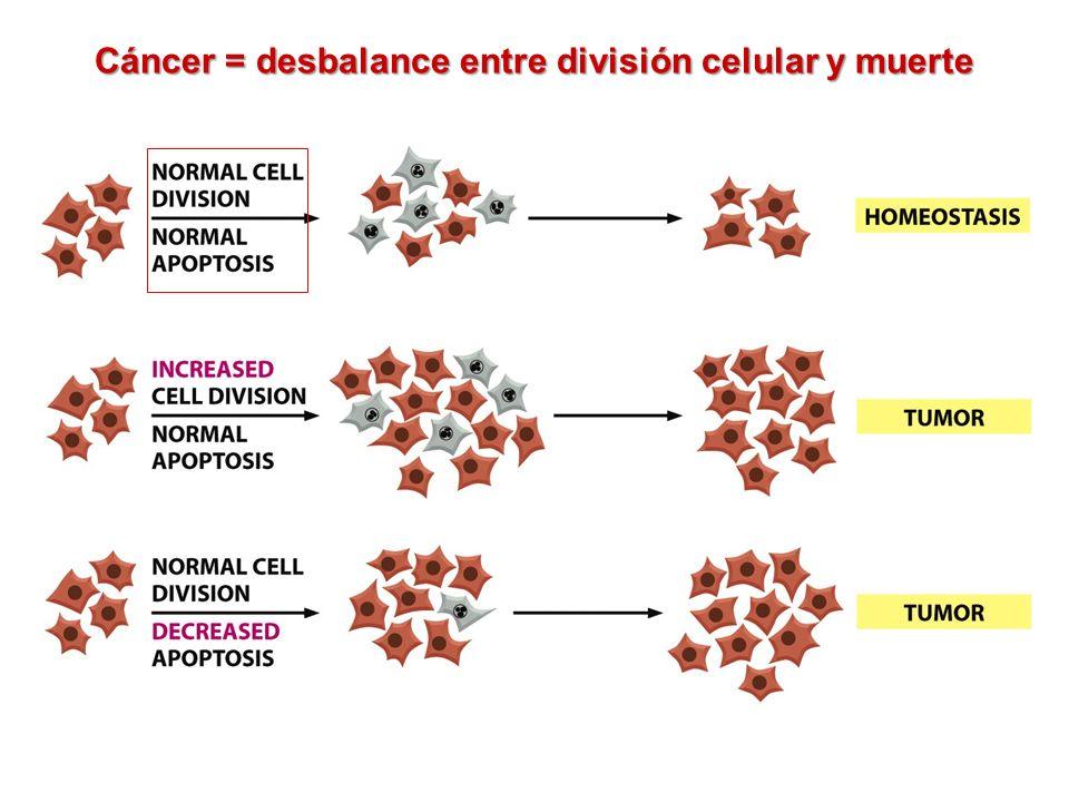 Cáncer = desbalance entre división celular y muerte