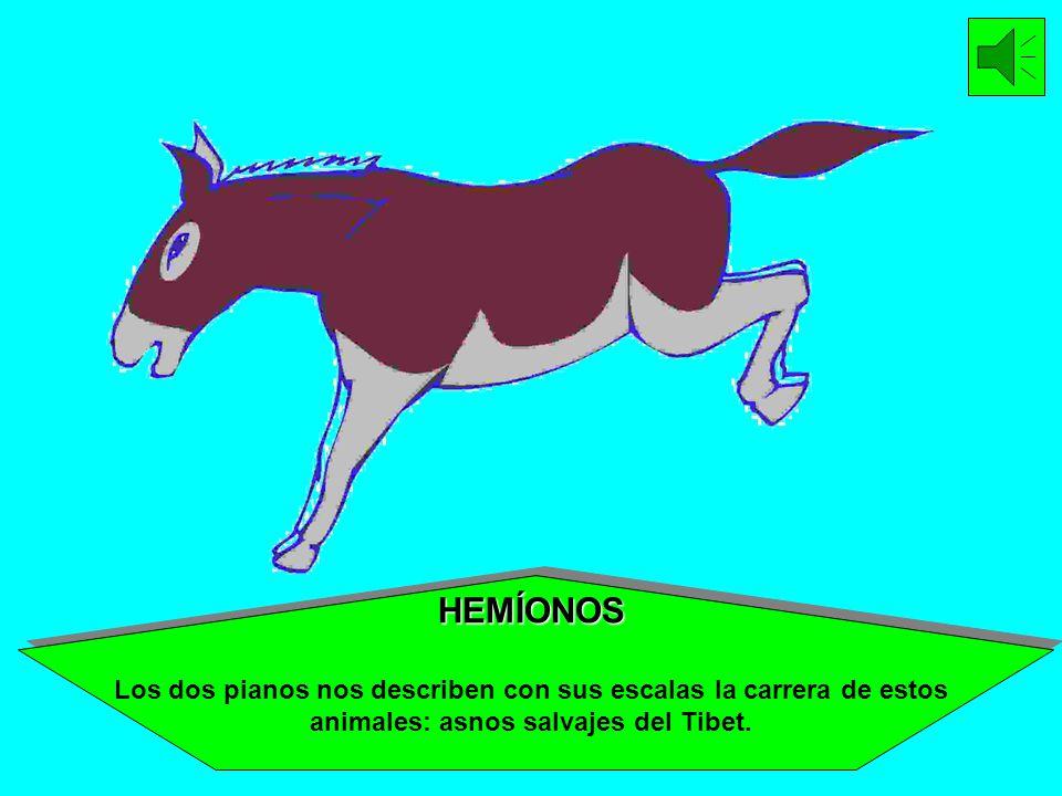 HEMÍONOS Los dos pianos nos describen con sus escalas la carrera de estos animales: asnos salvajes del Tibet.