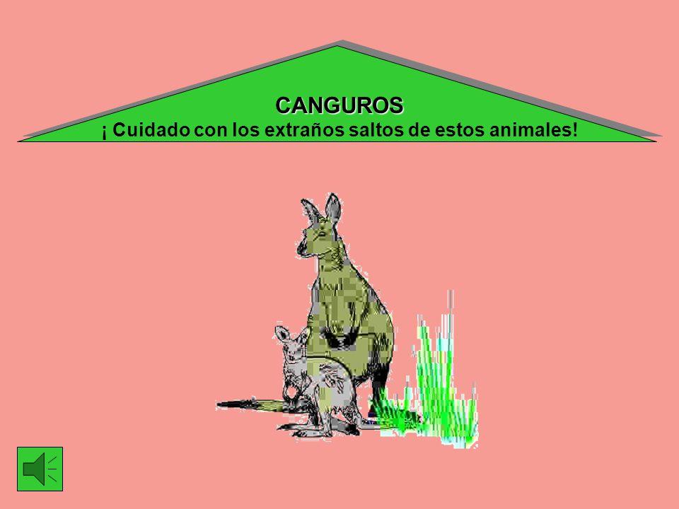 CANGUROS ¡ Cuidado con los extraños saltos de estos animales!