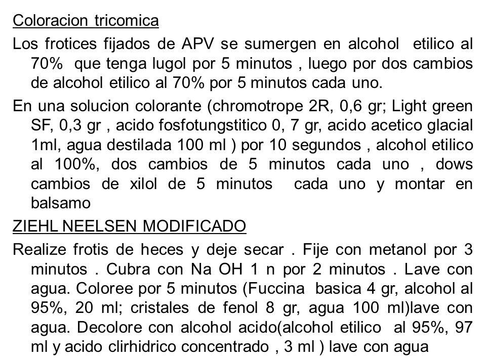 Coloracion tricomica Los frotices fijados de APV se sumergen en alcohol etilico al 70% que tenga lugol por 5 minutos , luego por dos cambios de alcohol etilico al 70% por 5 minutos cada uno.