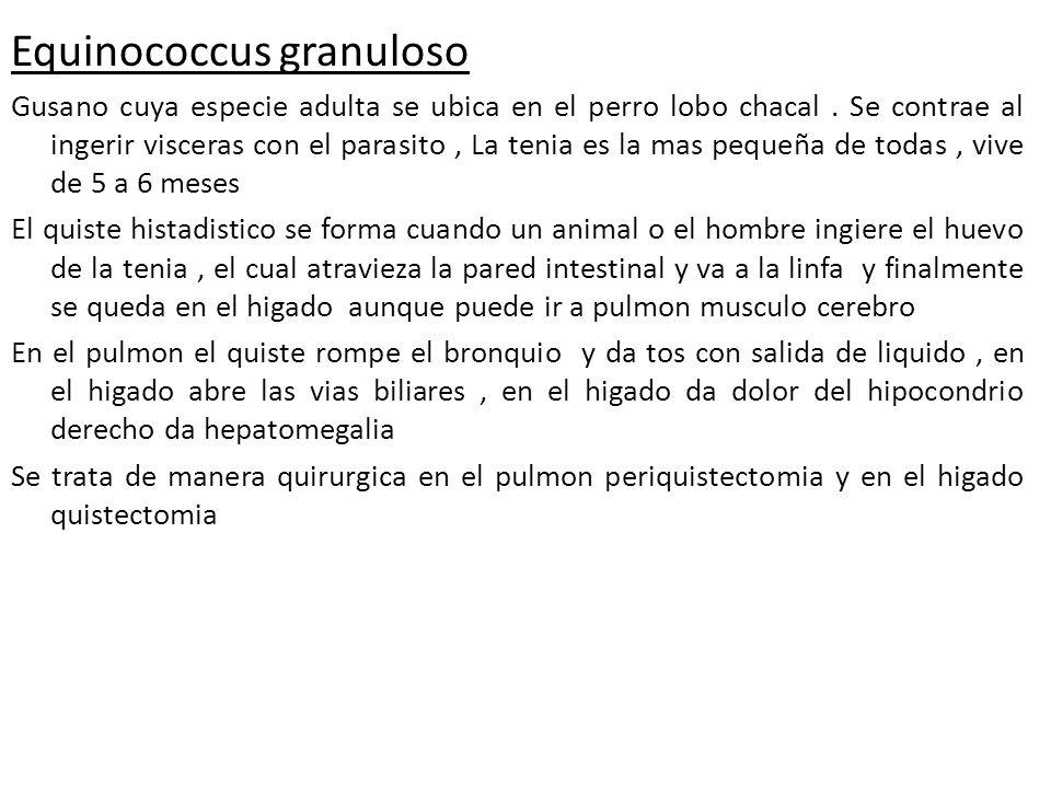 Equinococcus granuloso