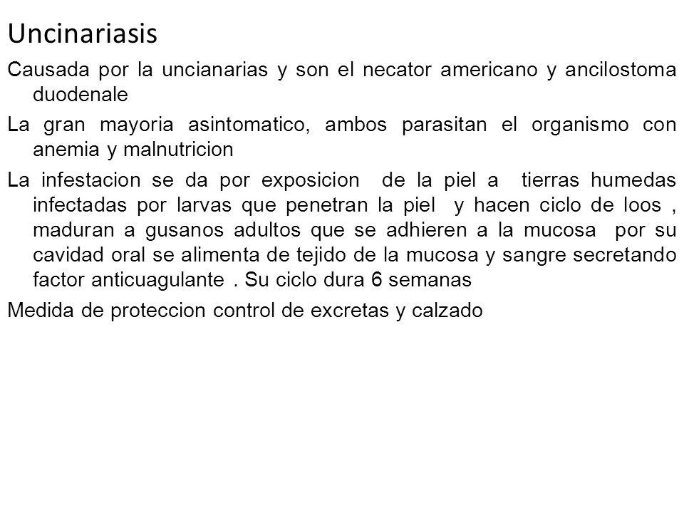 Uncinariasis Causada por la uncianarias y son el necator americano y ancilostoma duodenale.
