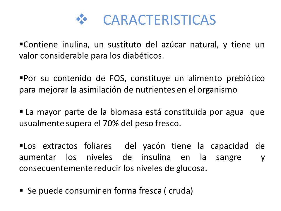 CARACTERISTICAS Contiene inulina, un sustituto del azúcar natural, y tiene un valor considerable para los diabéticos.