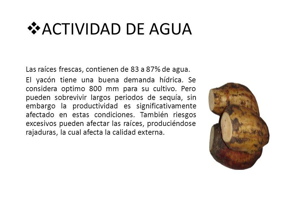 ACTIVIDAD DE AGUA Las raíces frescas, contienen de 83 a 87% de agua.
