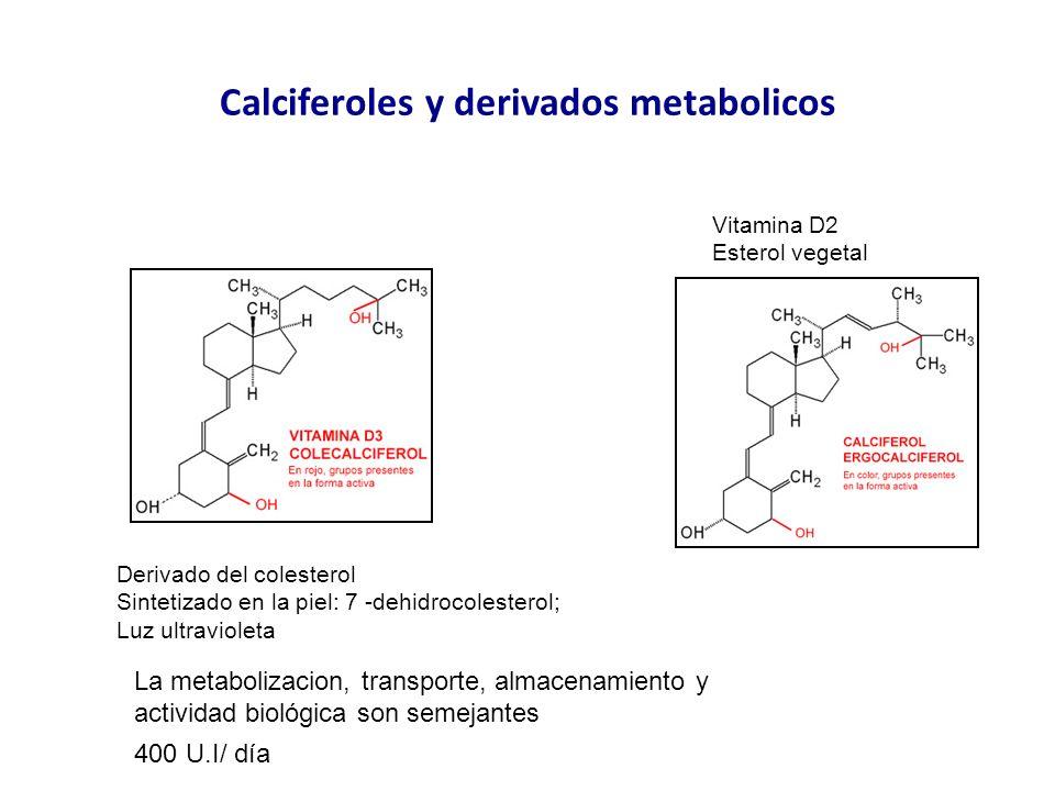 Calciferoles y derivados metabolicos