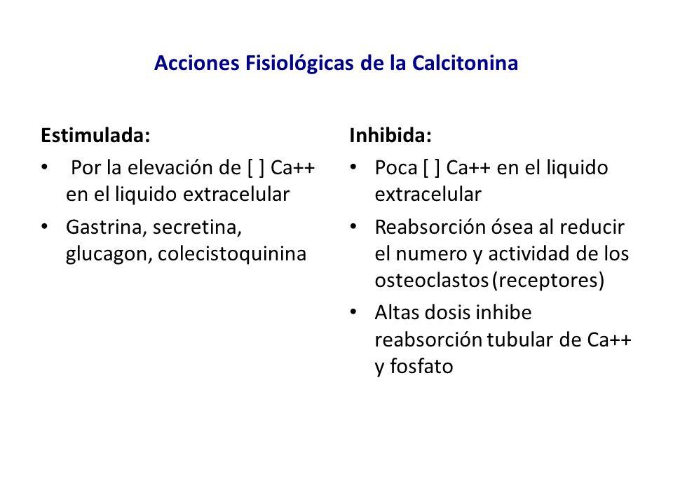 Acciones Fisiológicas de la Calcitonina