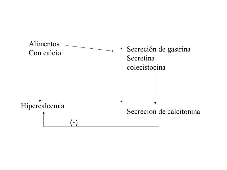 AlimentosCon calcio. Secreción de gastrina. Secretina. colecistocina. Hipercalcemia. Secrecion de calcitonina.