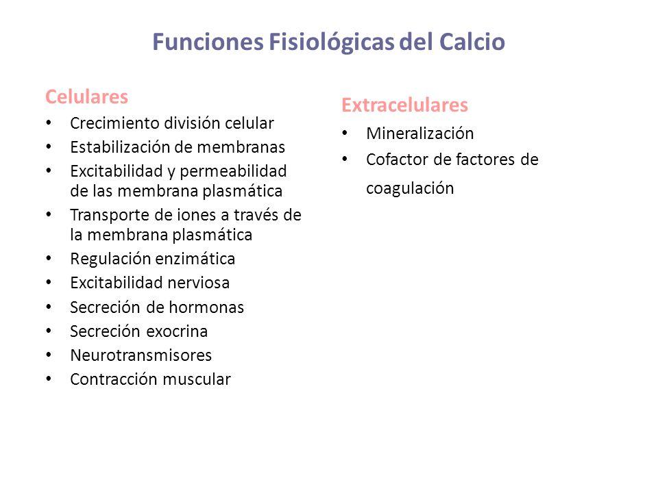 Funciones Fisiológicas del Calcio