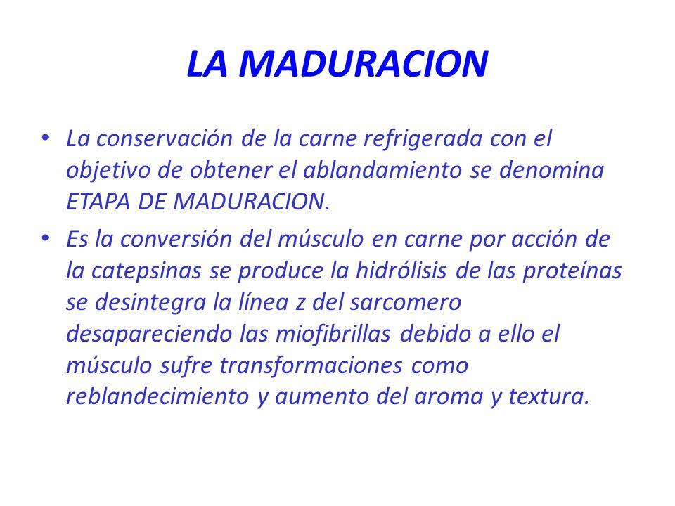 LA MADURACION La conservación de la carne refrigerada con el objetivo de obtener el ablandamiento se denomina ETAPA DE MADURACION.