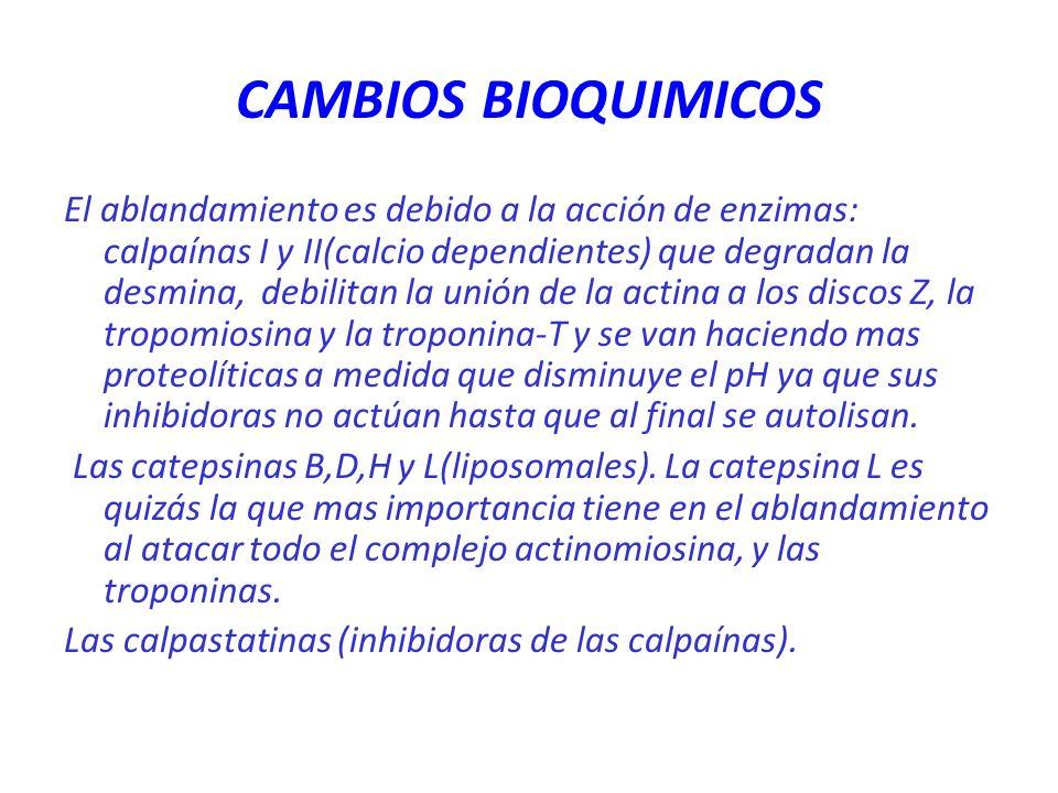 CAMBIOS BIOQUIMICOS