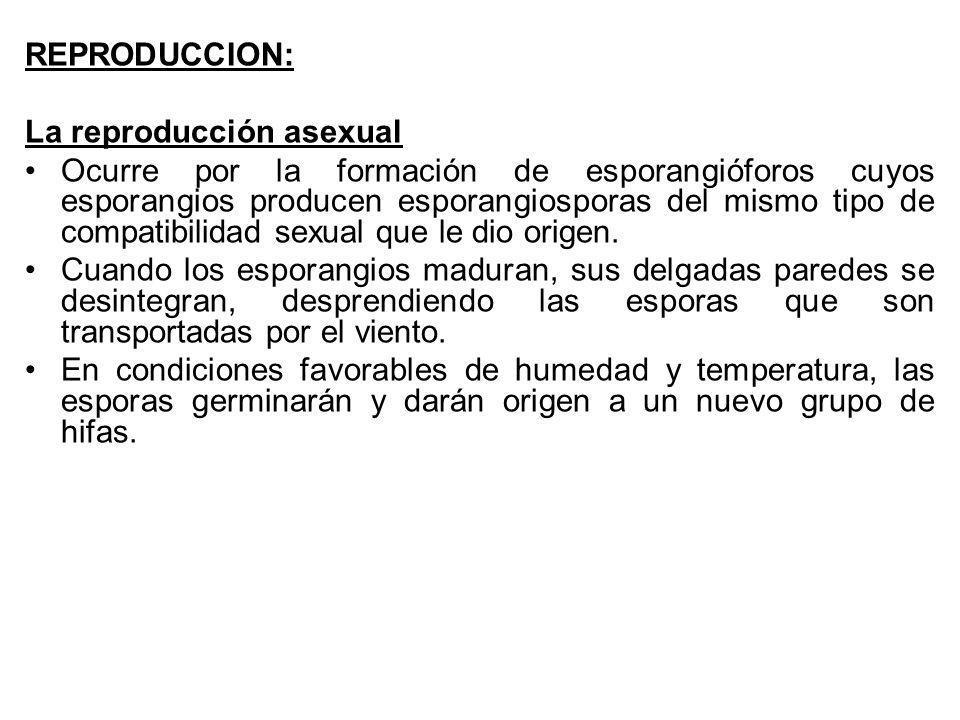 REPRODUCCION: La reproducción asexual.