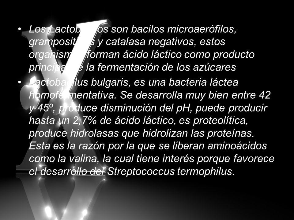 Los Lactobacilos son bacilos microaerófilos, grampositivos y catalasa negativos, estos organismos forman ácido láctico como producto principal de la fermentación de los azúcares