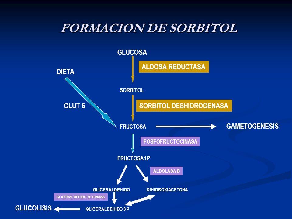 FORMACION DE SORBITOL GLUCOSA ALDOSA REDUCTASA DIETA GLUT 5