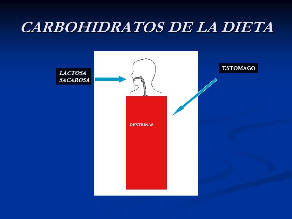 CARBOHIDRATOS DE LA DIETA