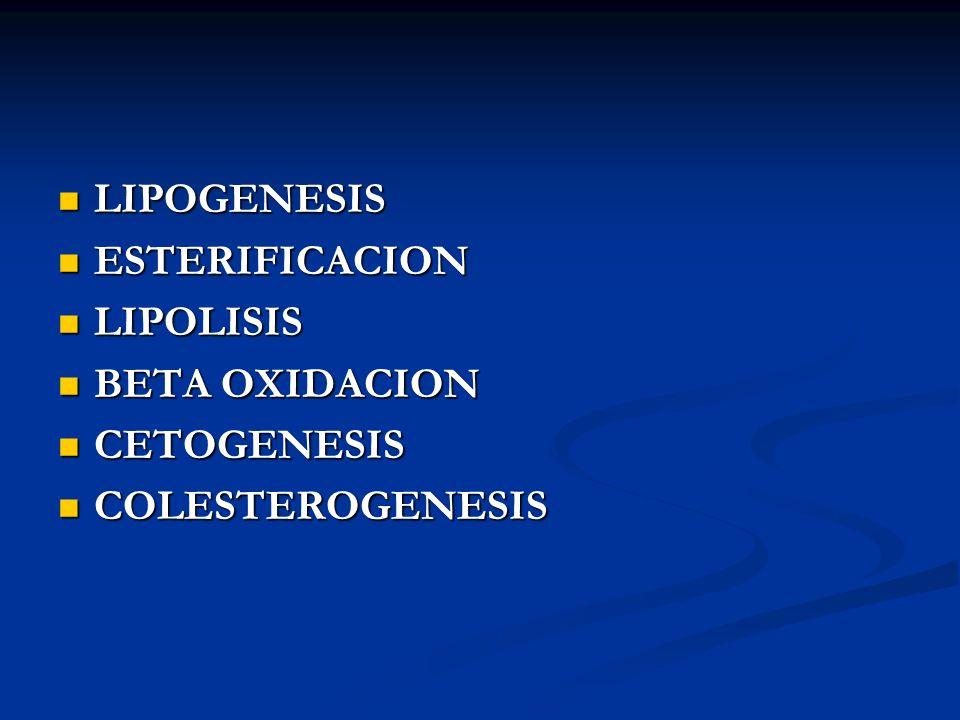 LIPOGENESIS ESTERIFICACION LIPOLISIS BETA OXIDACION CETOGENESIS COLESTEROGENESIS